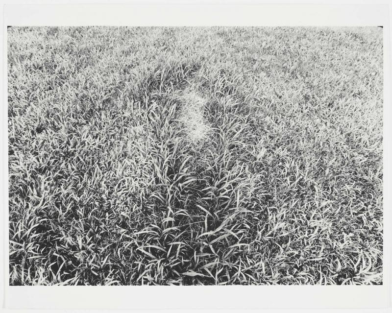 Ana Mendieta, Untitled (Silueta Series, Iowa), c. 1978, Photograph, gelatin silver print.