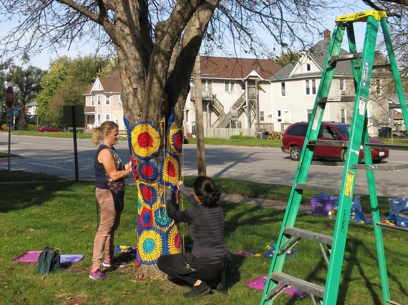 Yarn-bombing a tree at Longfellow Elementary School, Rock Island, IL