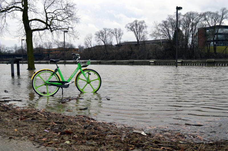 Lime Bike in water in howard park