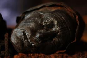 Tollund Man, an Iron Age bog body, found in 1950 in a peat bog on the Jutland Peninsula in Denmark. From Ghosts of Murdered Kings/NOVA