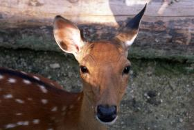 Morgantown is trying something new, to figure out how many deer are in the city.