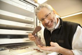 Neil Shubin holding fossilized bones from Tiktaalik roseae in his lab at the University of Chicago.