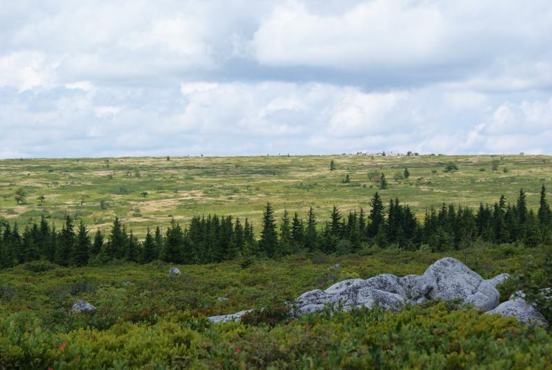 View across Dolly Sods, W.Va.