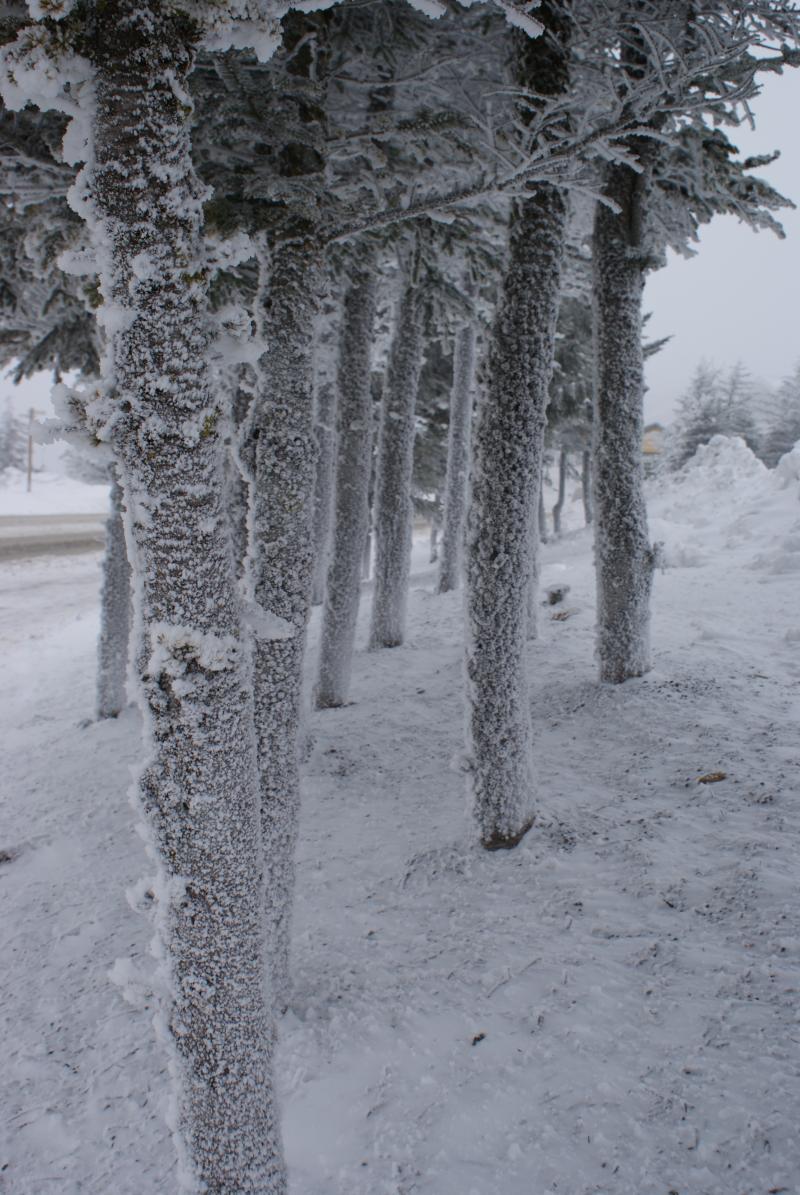 Snowshoe in Pocahontas County, W.Va.