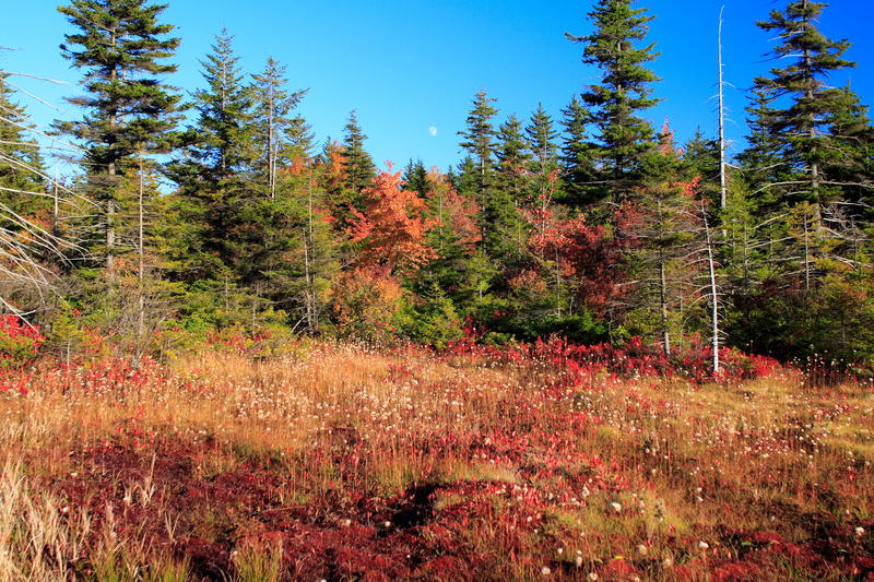 early fall at Dolly Sods, WV