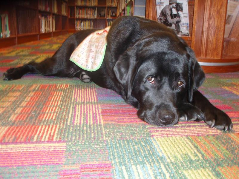 Paca, a therapy dog who left Mary C Snow school last year