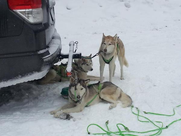Kara Holsopple met these dogs working on a mushing story for The Allegheny Front
