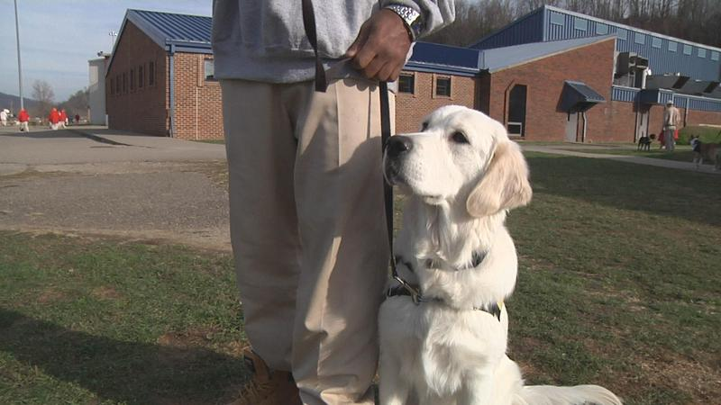 Leo the dog is a service dog in training. He was trained by an inmate, named Stephfon, at the St. Mary's Correctional Center, W.Va.