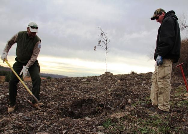 Patrick Angel, of the U.S. Office of Surface Mining, and Mike French, of Green Forests Work, planting a tree at a former Eastern Kentucky surface mine. Photo: Reid R. Frazier