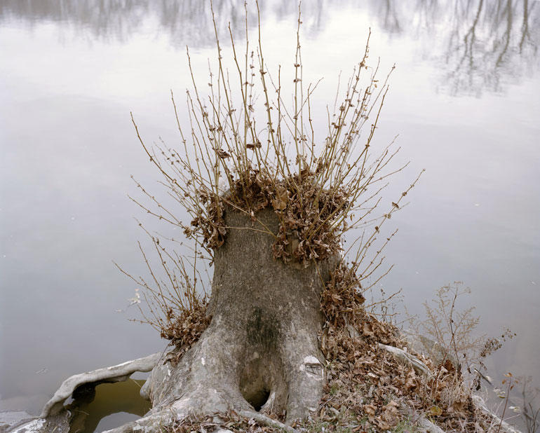 "Stump, Great Miami River, Hamilton, OH - from ""Vanishing Points""  2013-14 series"