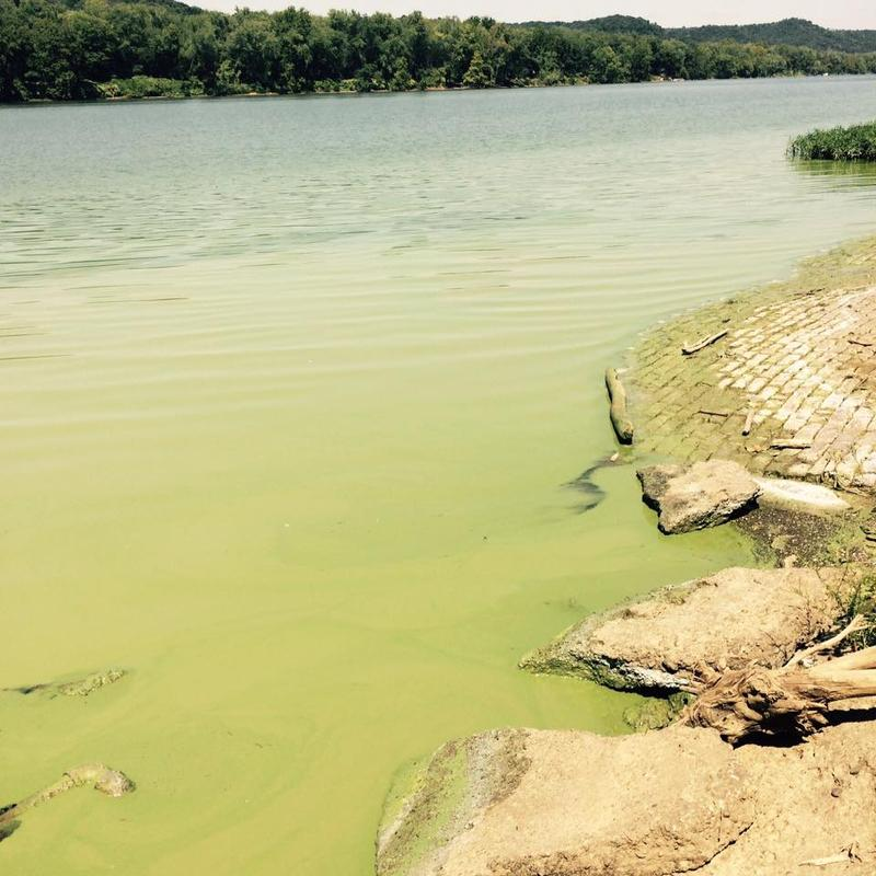 """Algal bloom in Sistersville, West Virginia. August 28, 2015 """"It is there some days and others it's gone,"""" says photographer and West Virginia resident Ethan Wells. """"Just depends on how bright the sun is and how fast the river flows."""""""