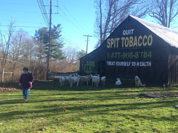 Greta Johnston stands in front of her tobacco prevention barn in Mercer County.