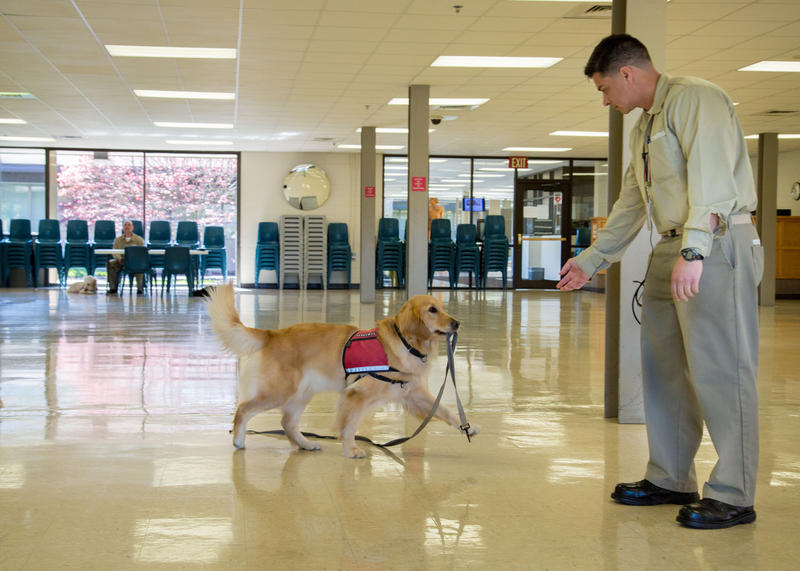 Biley brings her leash to trainer Jeff Morrero at  the minimum security FCI prison in Morgantown.
