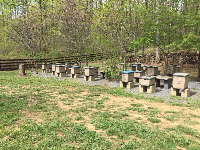 Bees, Honey, Honey Bees, Geezer Ridge Farm