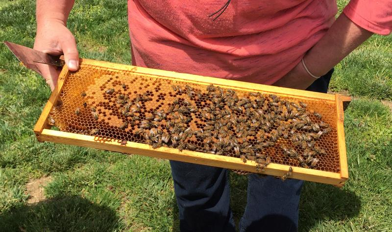 Bees, Honey, Honey Bees, Geezer Ridge Farm