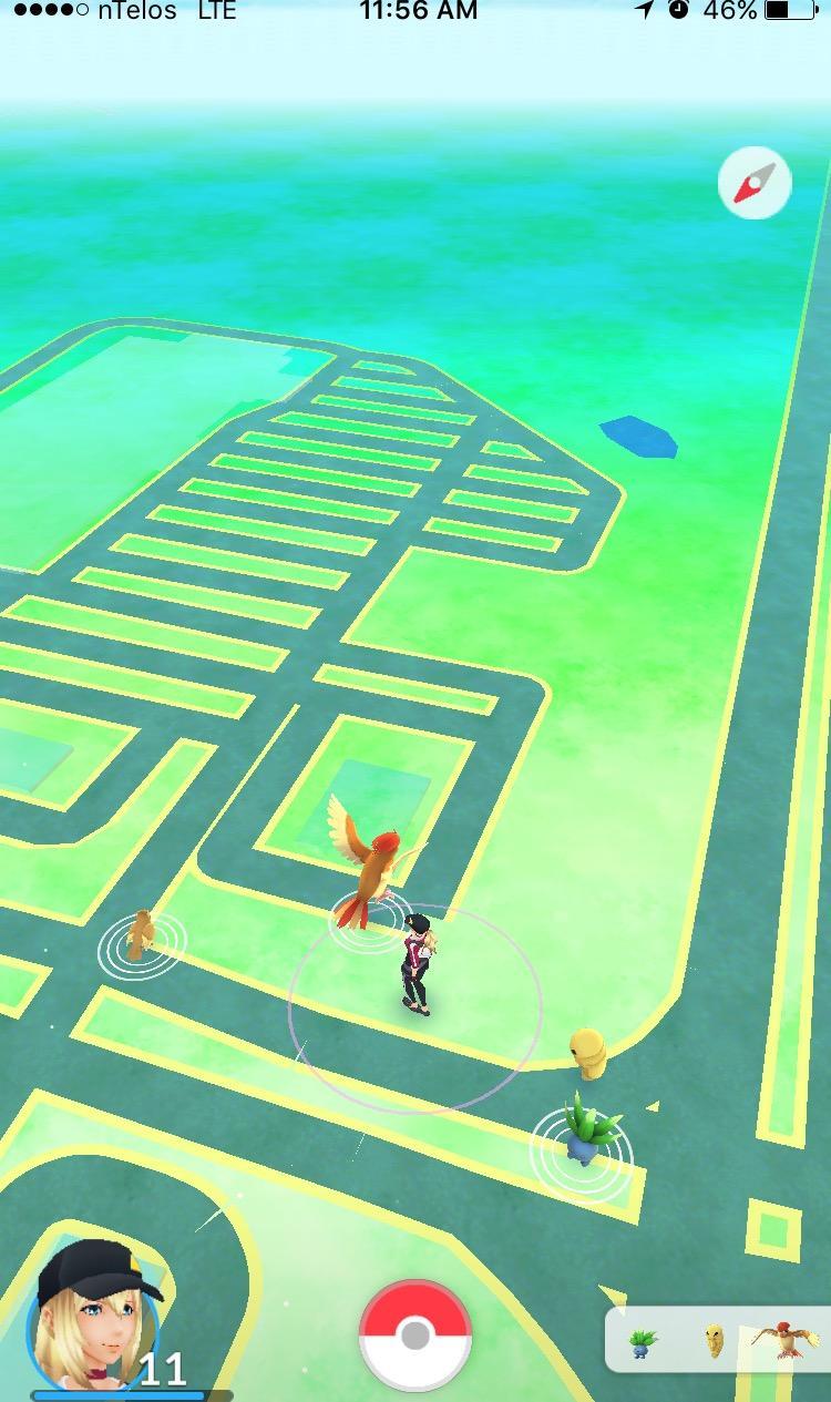 Wild Pokémon.