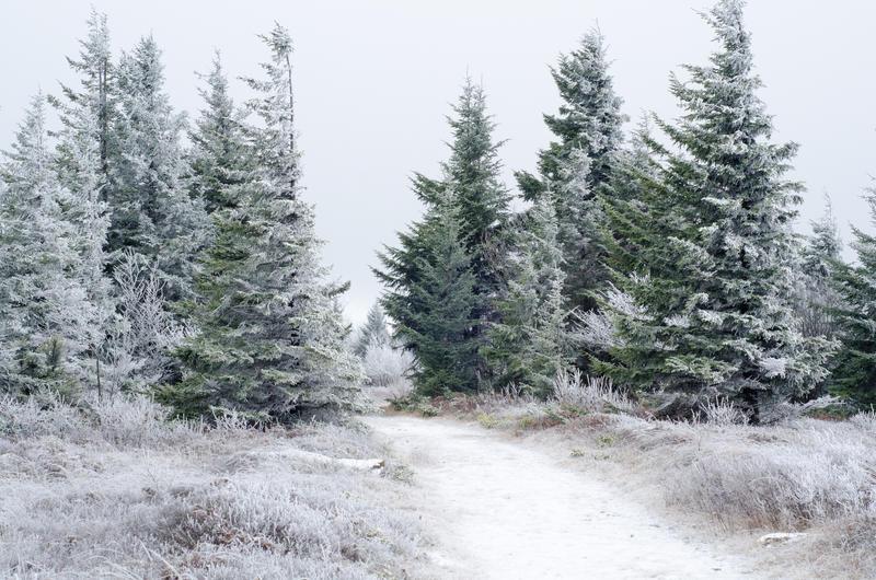 Winter in Dolly Sods Wilderness