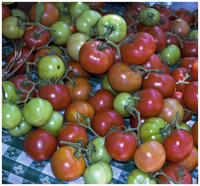 WVU Researchers Create Two New Tomato Varieties West Virginia - Us growing table for tomatoes via map