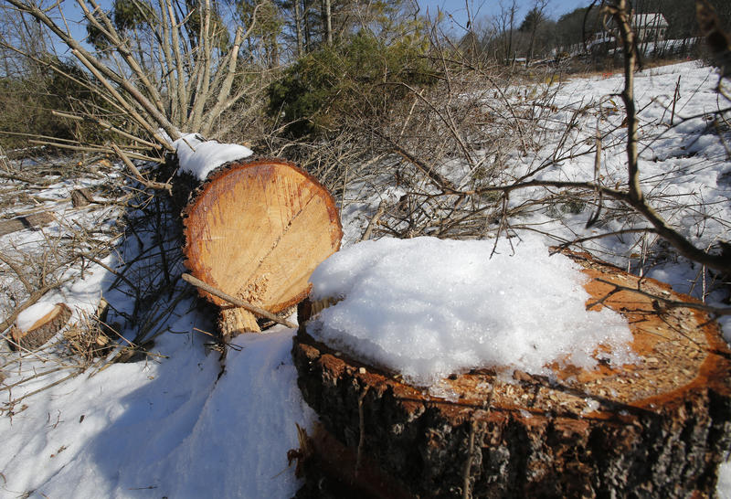Downed trees mark the route of the Atlantic Coast Pipeline in Deerfield, Va., Thursday, Feb. 8, 2018. Work is progressing on clearing a path for the pipeline.