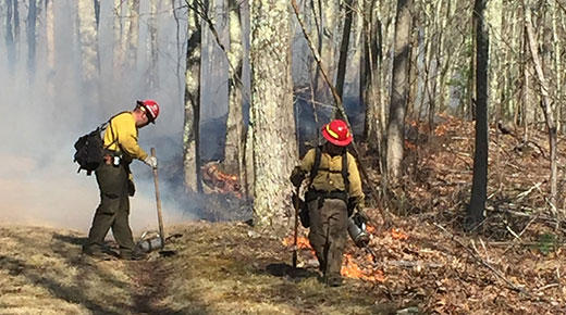 Crews conduct prescribed burns among the brown fall undergrowth of fall in a hardwood forest area in the Monongahela National Forest