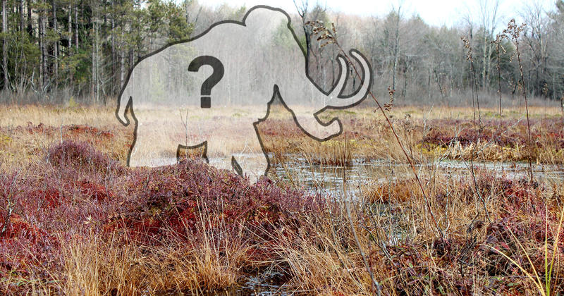 What sort of creatures called Cranesville Swamp in WV home during the Ice Age?