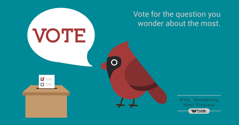 Vote for the question you wonder about the most