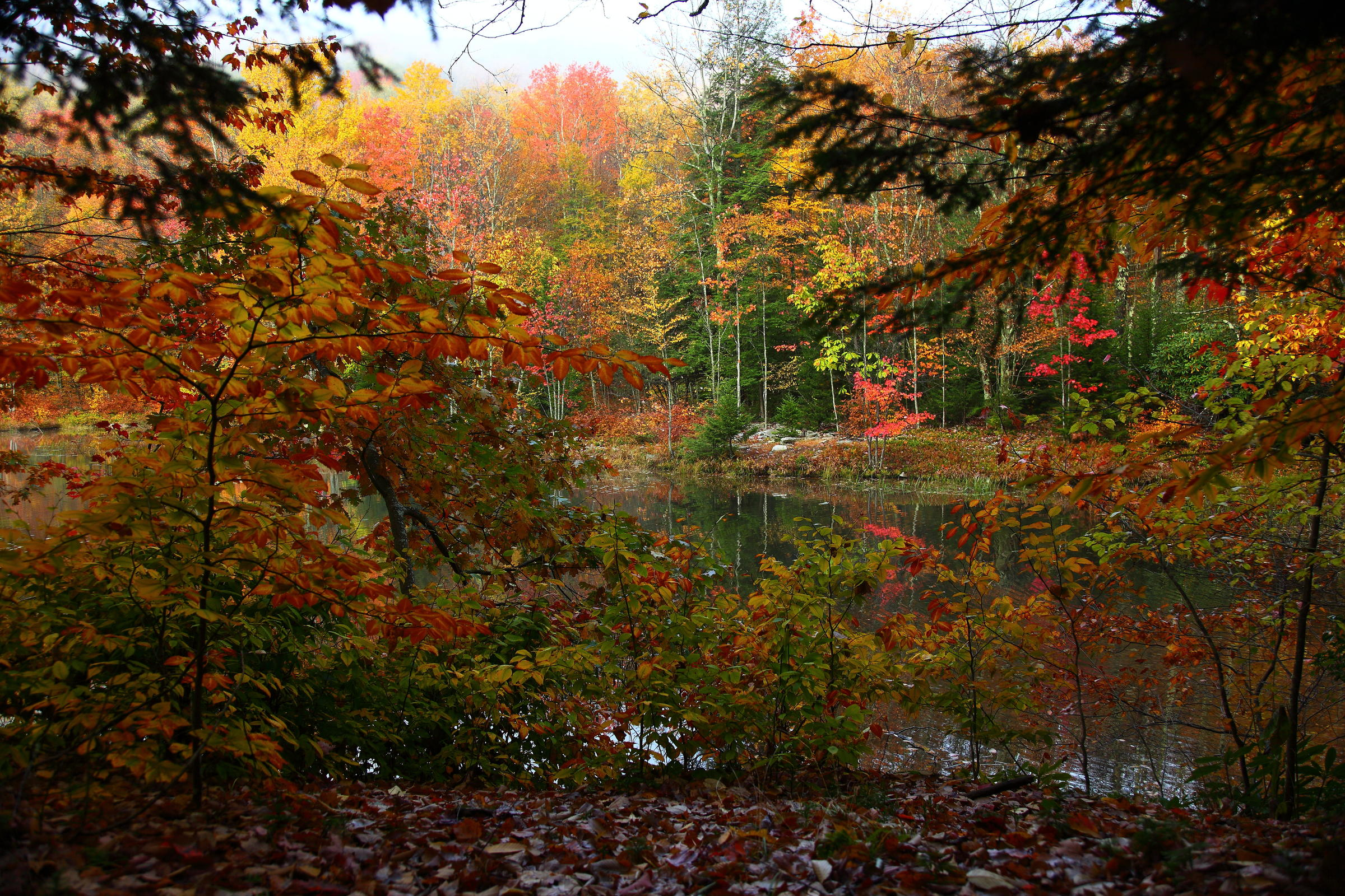 Foresters Say This Is Last Good Weekend For Leaf Peeping