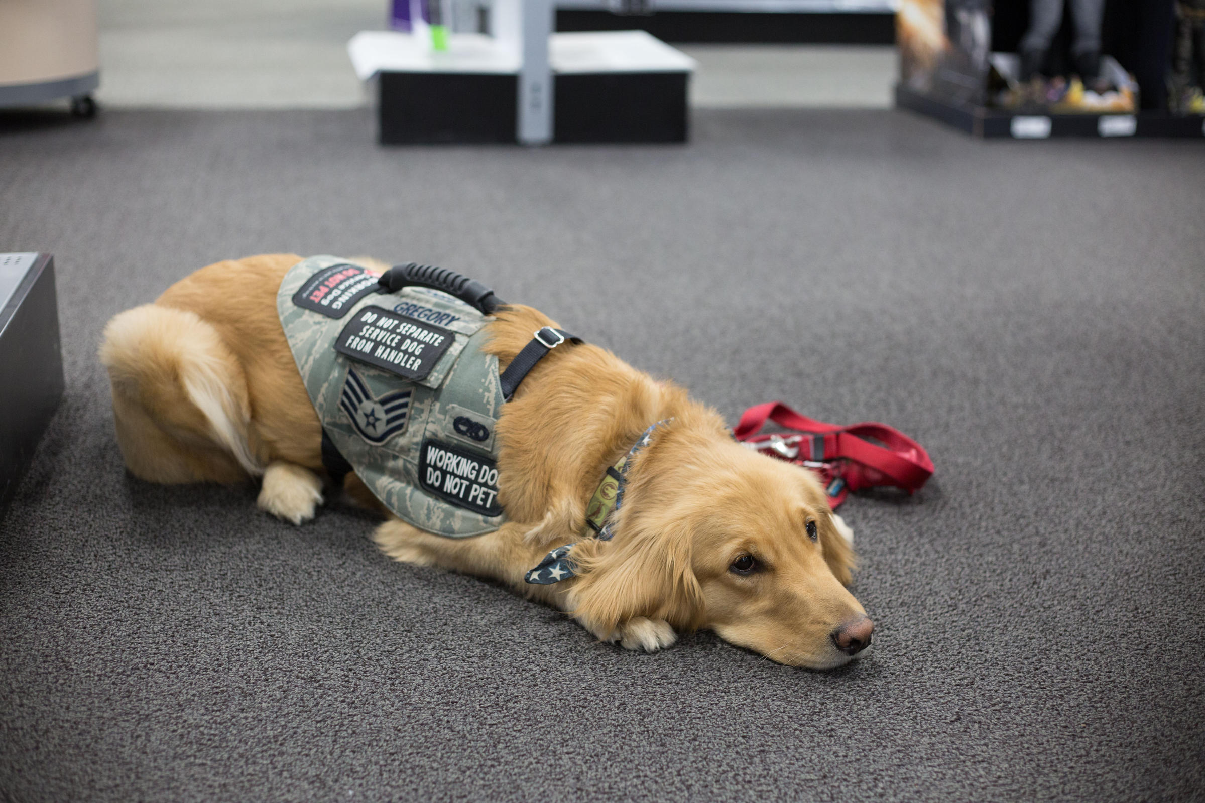 Incarcerated Veterans Train Service Dogs For Other Veterans West