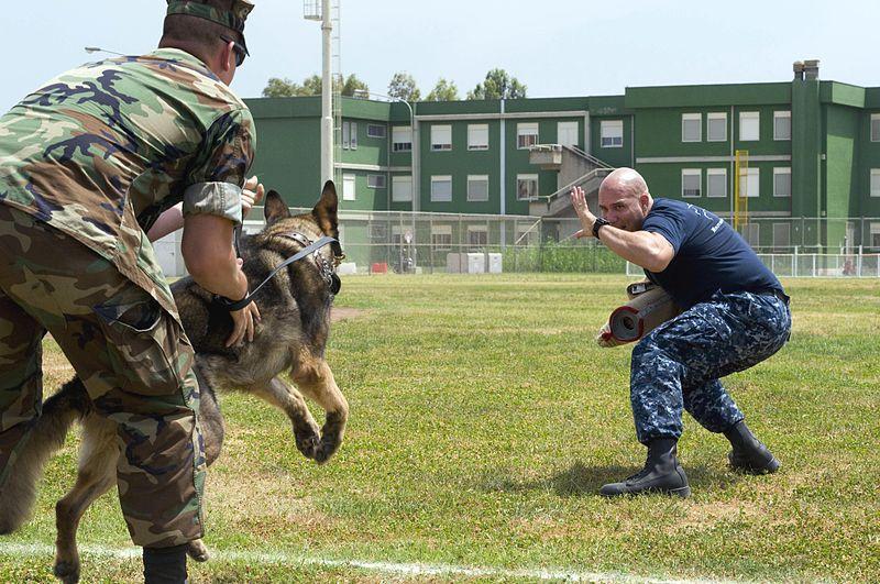 Dog Training Charleston Wv