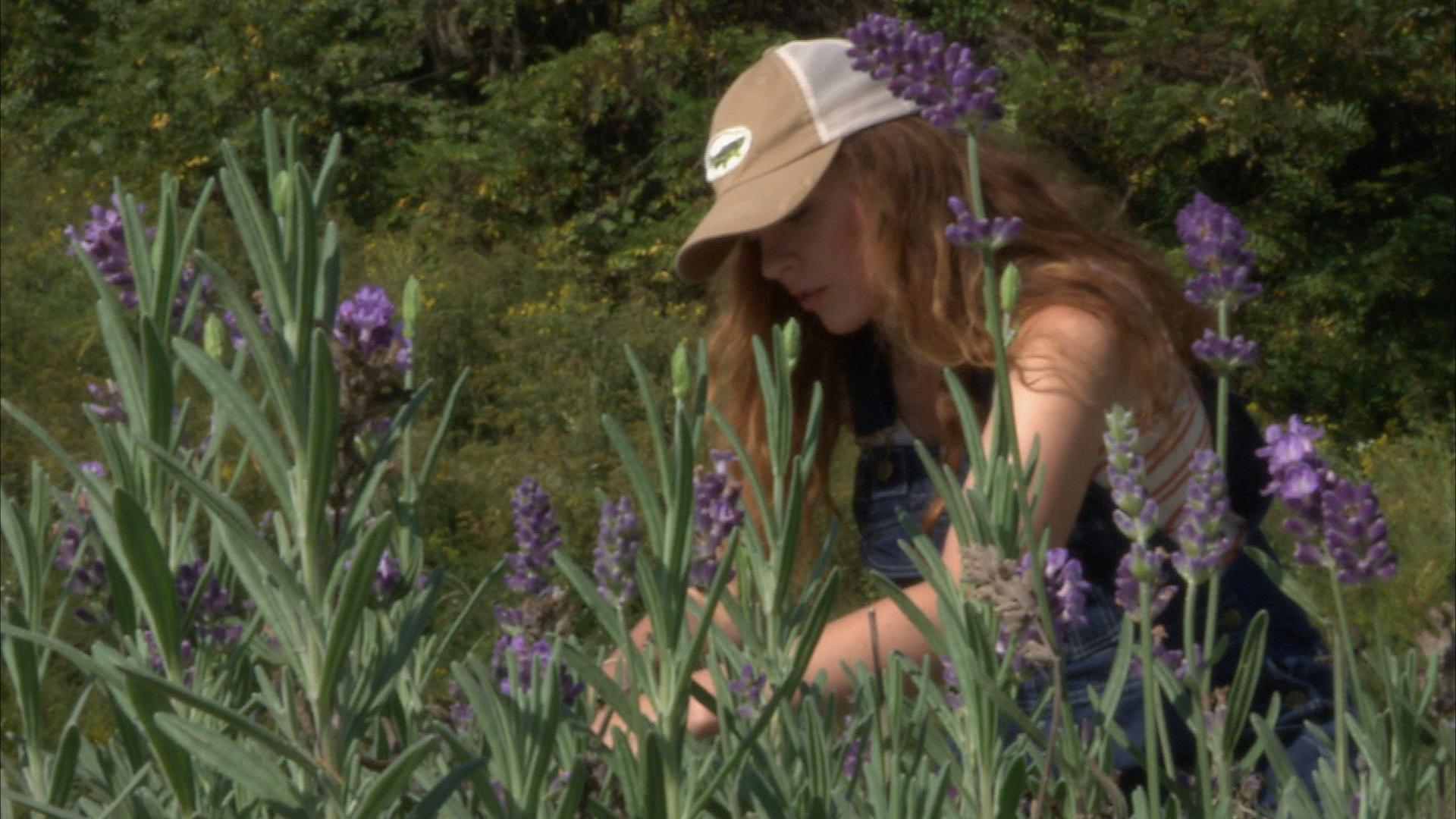 New Wave of Lavender Farmers Hope to Revive Barren Stripmines into ...
