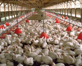 Virginia Poultry Farm