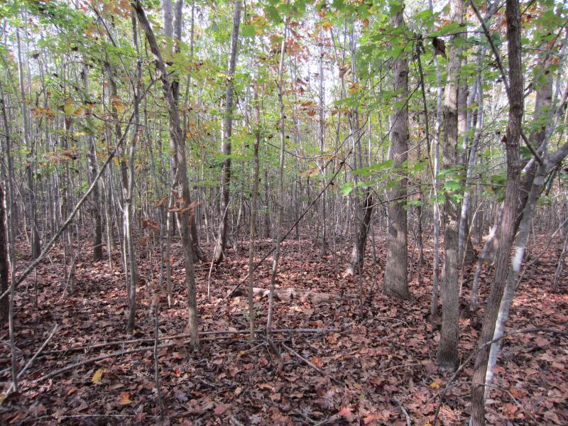 10 years after clearcutting