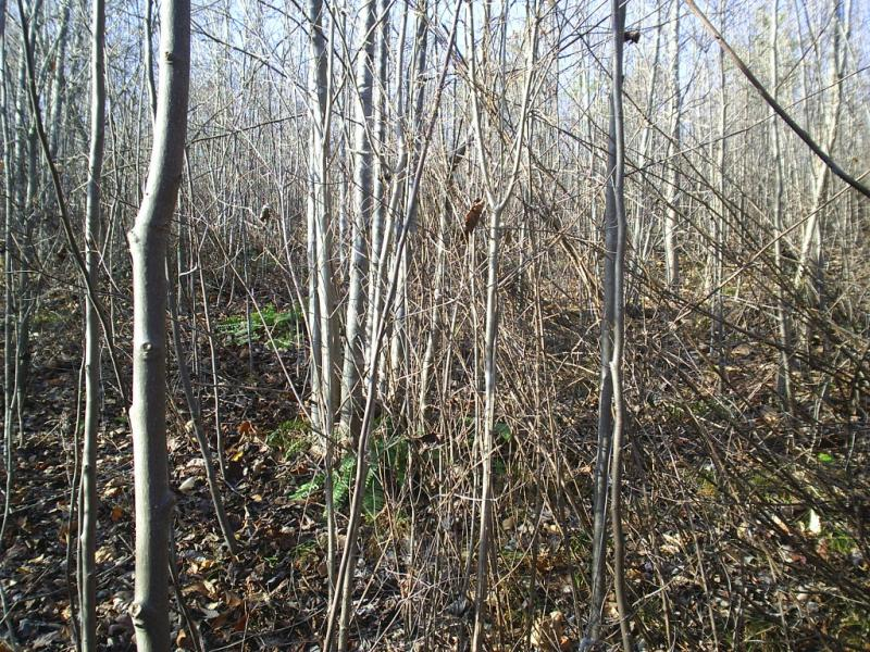 6 years after clearcutting