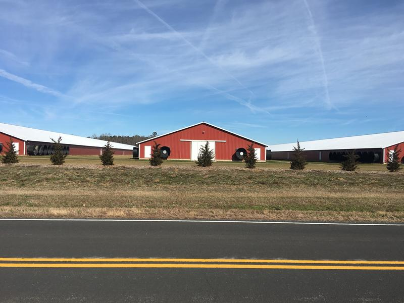 New poultry houses in Accomack County near the Virginia Institute of Marine Science.