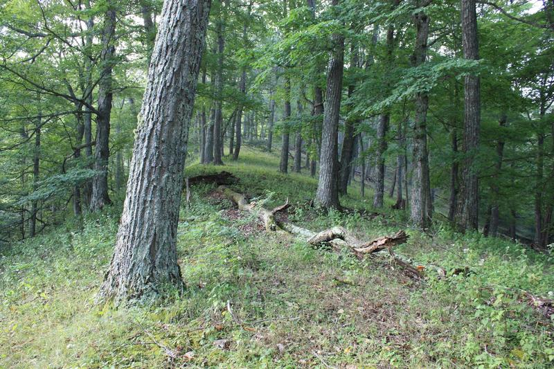 They say at least 300 trees along a 3,000-foot ridge are older than this country. Many would be lost if the Atlantic Coast Pipeline is built.