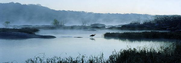 Great Blue Heron on a Misty James River.