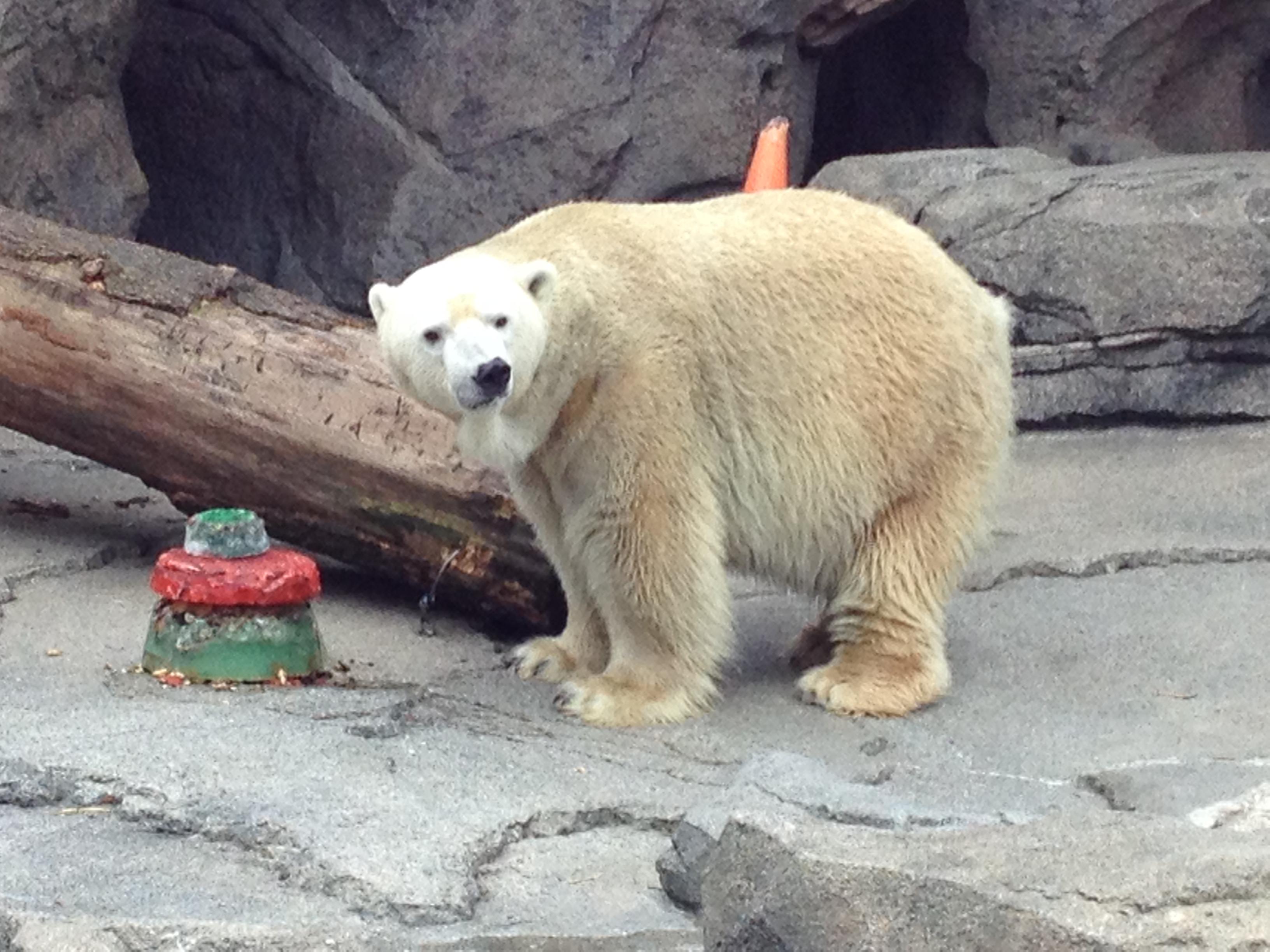 Christmas Treats For Cincinnati Zoo Animals Wvxu