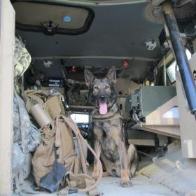 Arko, a military dog, out of Wright Pat and deployed to Iraq and Afghanistan, will be remembered Friday in a special service. He died of a sudden illness in February.