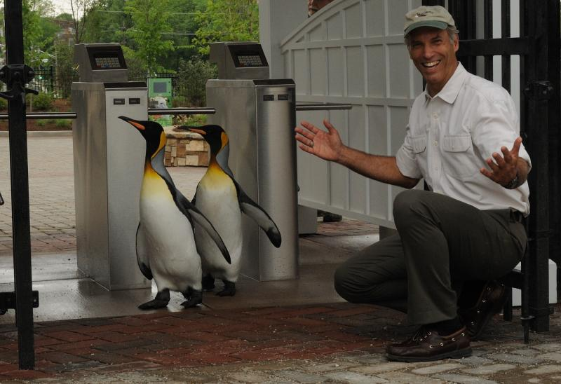 The Cincinnati Zoo's Thane Maynard with two of the Zoo's penguins.