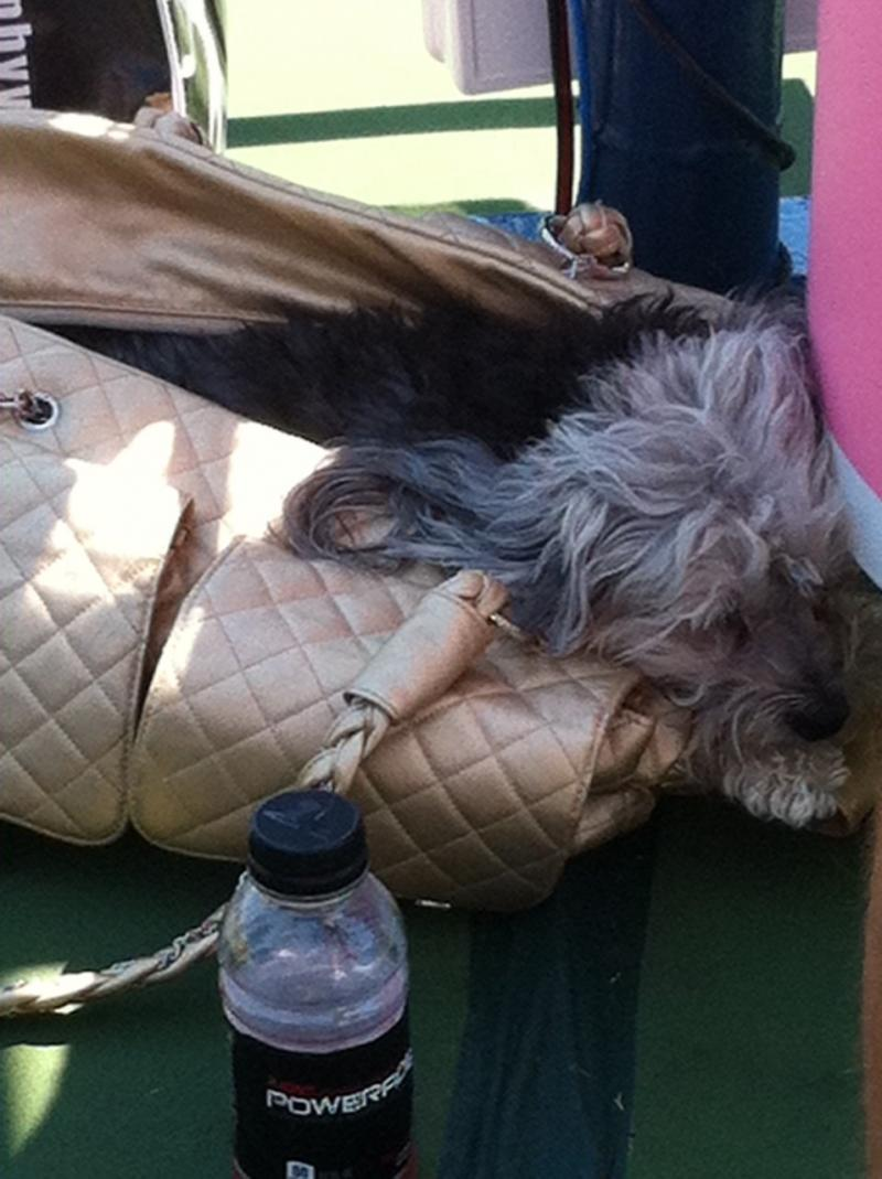 Venus Williams' dog