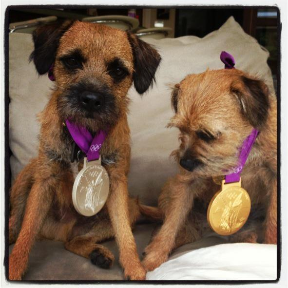 Andy Murray's dogs wearing his Olympic medals