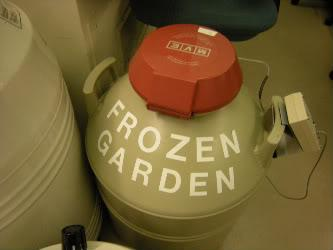 Nearly 1,000 seeds, spores, pollen and tissues are stored in liquid nitrogen...some up to 25 years.