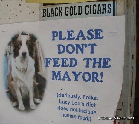 The Mayor of Rabbit Hash prefers dog food.