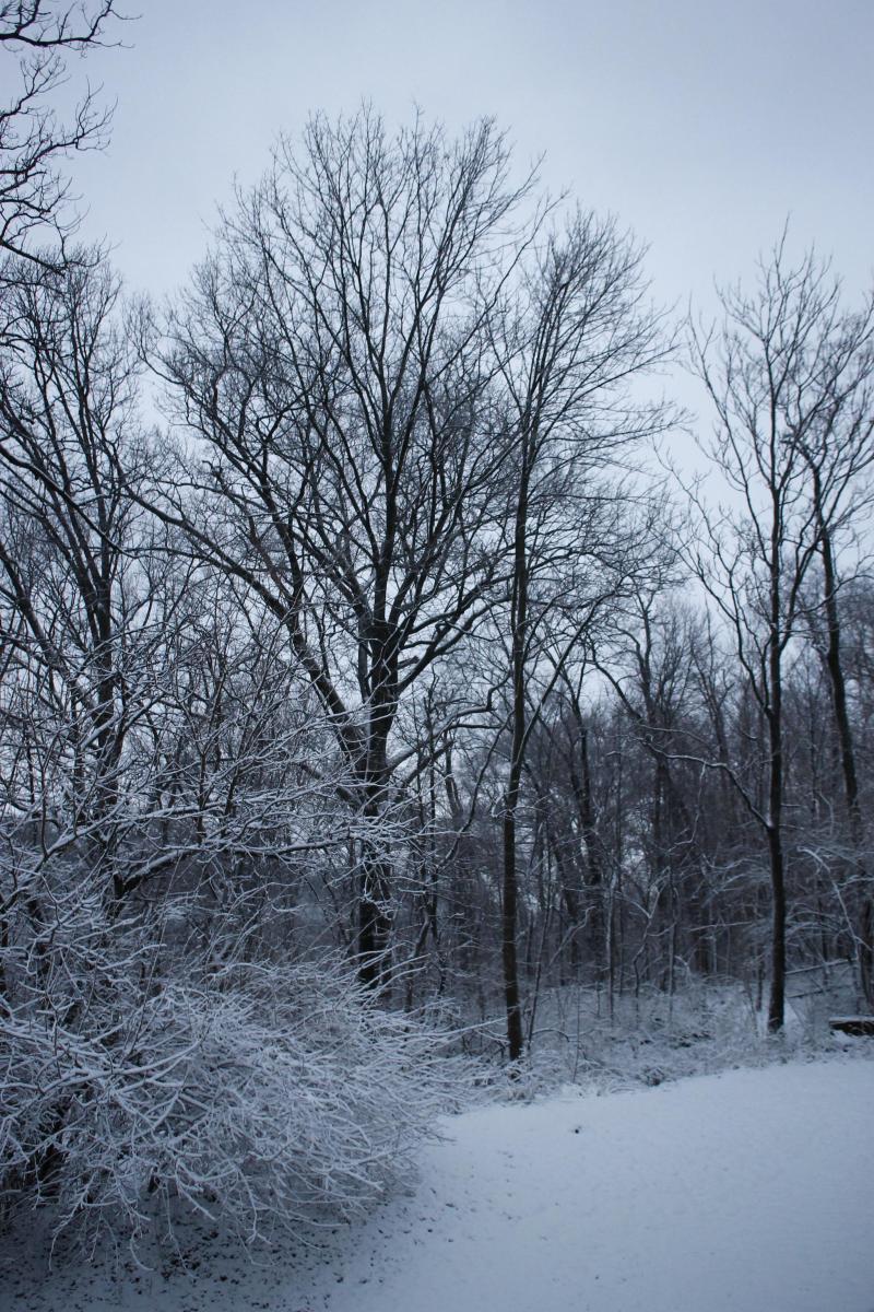 Early morning snow in Burnett Woods
