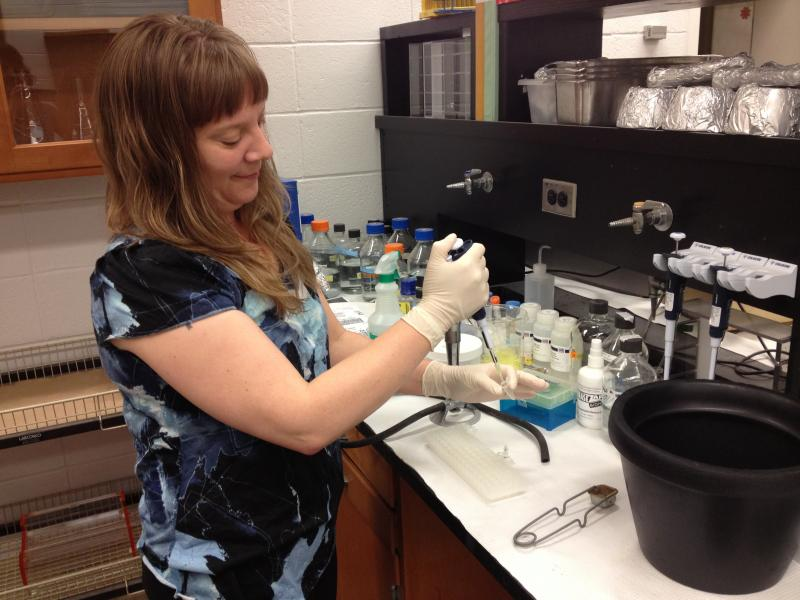 UC 's Dr. Gina Baucom says destroying the bacterium on and in bed bugs could eliminate them.