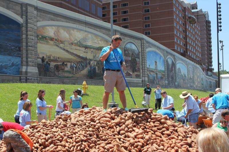 Volunteer Drew Schmidt of Cincinnati works to level the pile of sweet potatoes to within reach of people bagging the potatoes.