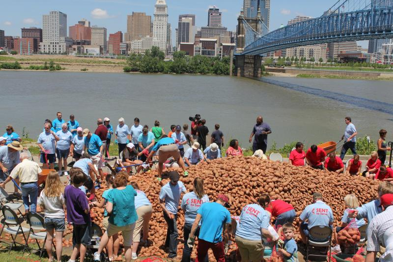 Community and church volunteers fill bags with more than 40,000 pounds of sweet potatoes.