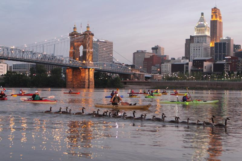 Geese join kayakers on their sunrise float Thursday.