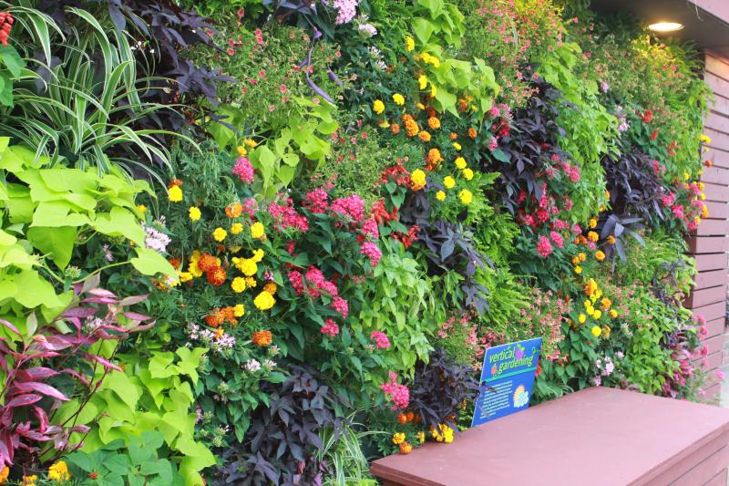 Vertical gardens help insulate walls while saving space.