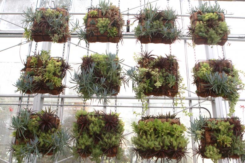 Krohn's Desert Room features a hanging vertical succulent garden.